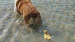The Kindness These 12 Animals Showed Each Other Will Make You Cry In Public