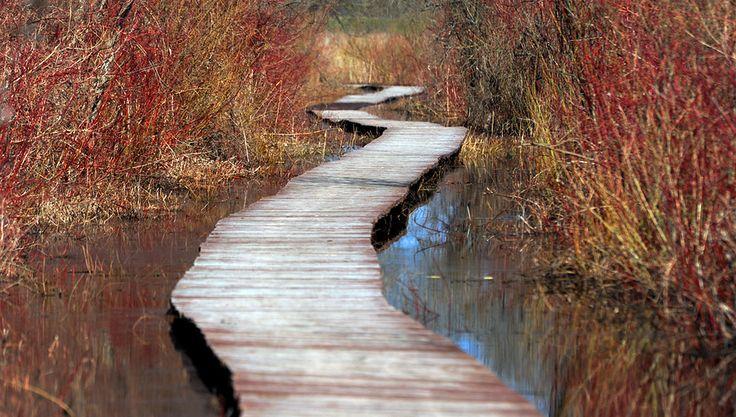 Znalezione obrazy dla zapytania biebrzański park narodowy krajobraz