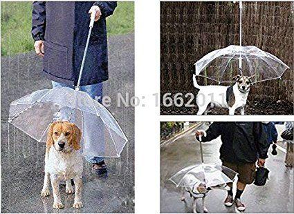 sypure (TM) Cane ombrello asciutta in Rainny giorni 1pezzo Cane ombrello trasparente colore per le piccole medie dimensioni cane