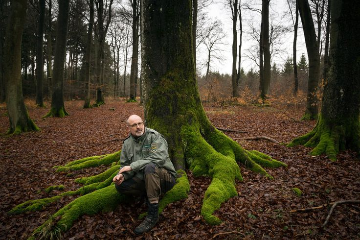 """Peter Wohlleben, a career ranger, has topped best-seller lists with """"The Hidden Life of Trees,"""" describing trees as social beings that…"""