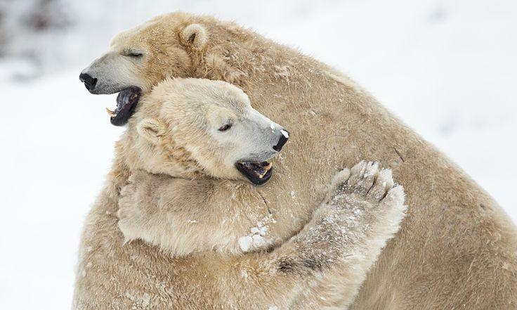 Scottish-Polar-Bears-009.jpg (2060×1236)