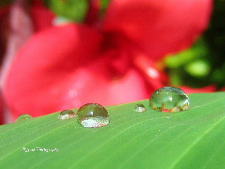 SUMMER DAY AFTER RAIN 🌸💖🌸
