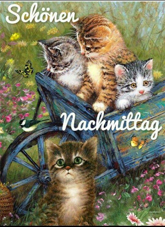44 Best Sch 246 Nen Nachmittag Und Abend Images On Pinterest