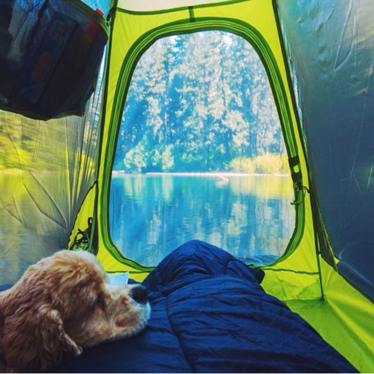 Make the best of camping with your furry best friend! #campingwithdogs #getoutandcamp