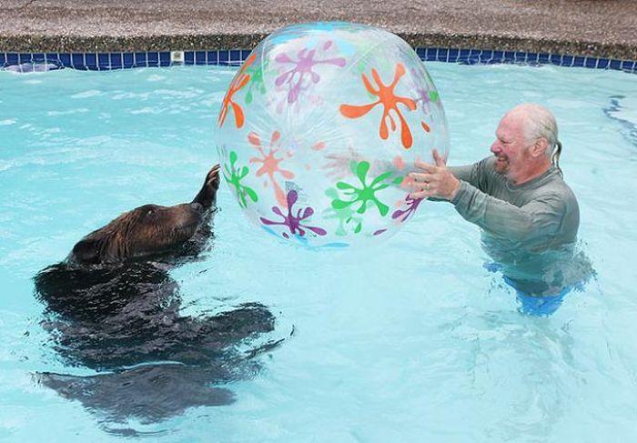 Τι να τον κάνεις το σκύλο αν έχεις αρκούδα;