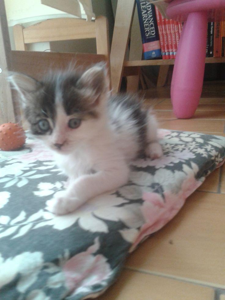 Tasia walks in a flower pillow!