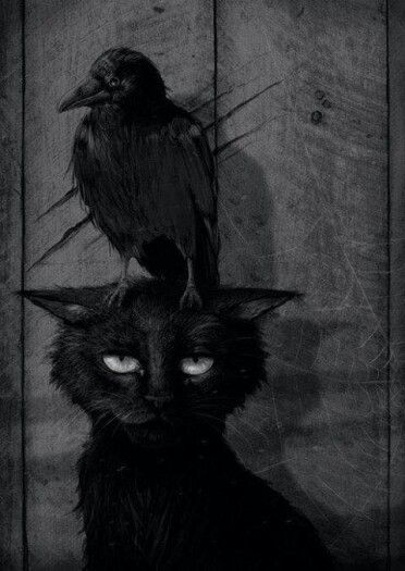 Black cat and raven