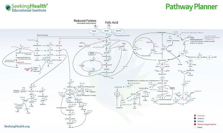 43 best mthfr  methylation images on pinterest