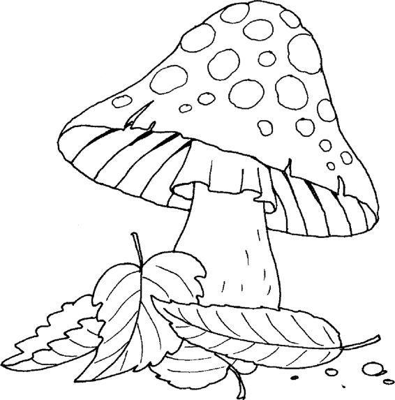 раскраска грибы мухоморы достаточно надёжный материал