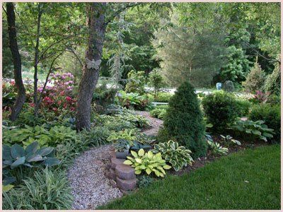 evergreen hosta rhodies azelea landscaping projects pinterest