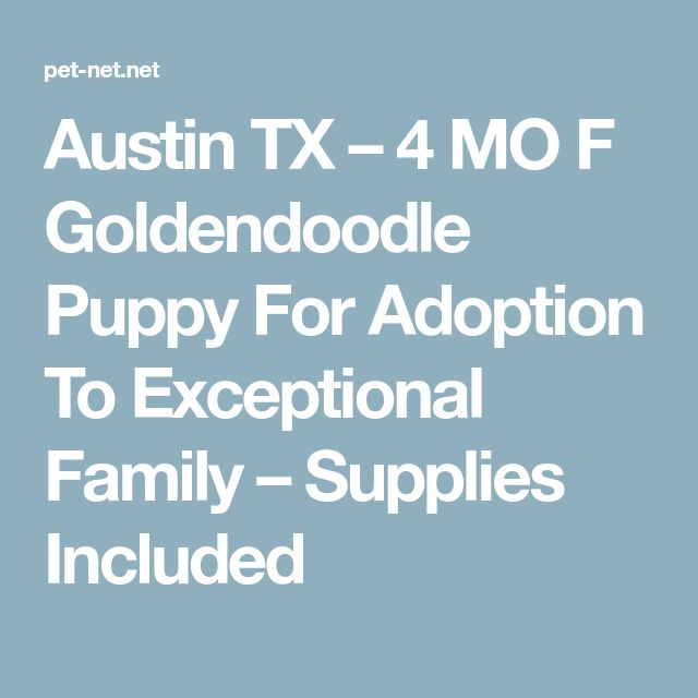 Austin TX – 4 MO F Goldendoodle Puppy For Adoption To Exceptional Family – Supplies Included