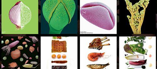 FOOD - la scienza dai semi al piatto. Straordinaria mostra a Milano - laBissa.com