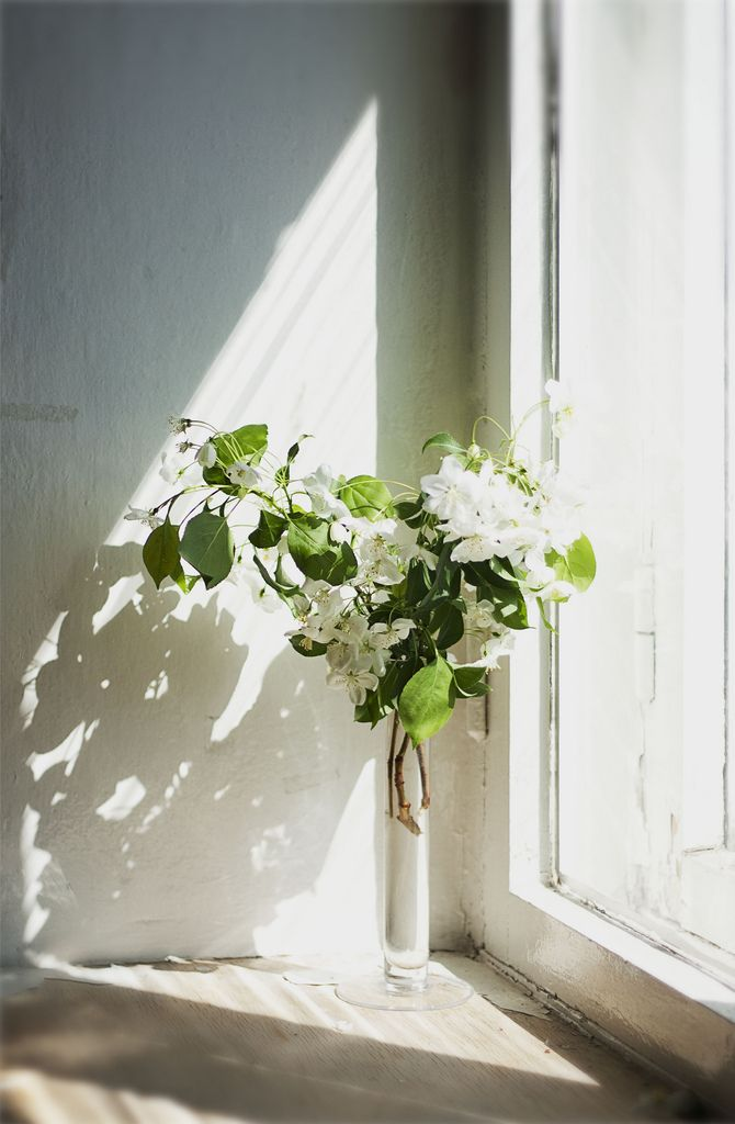freshly cut flowers in window light