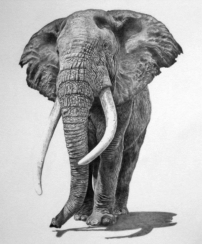 Por Amor al Arte: Hermosos y realistas dibujos de animales de todo el mundo