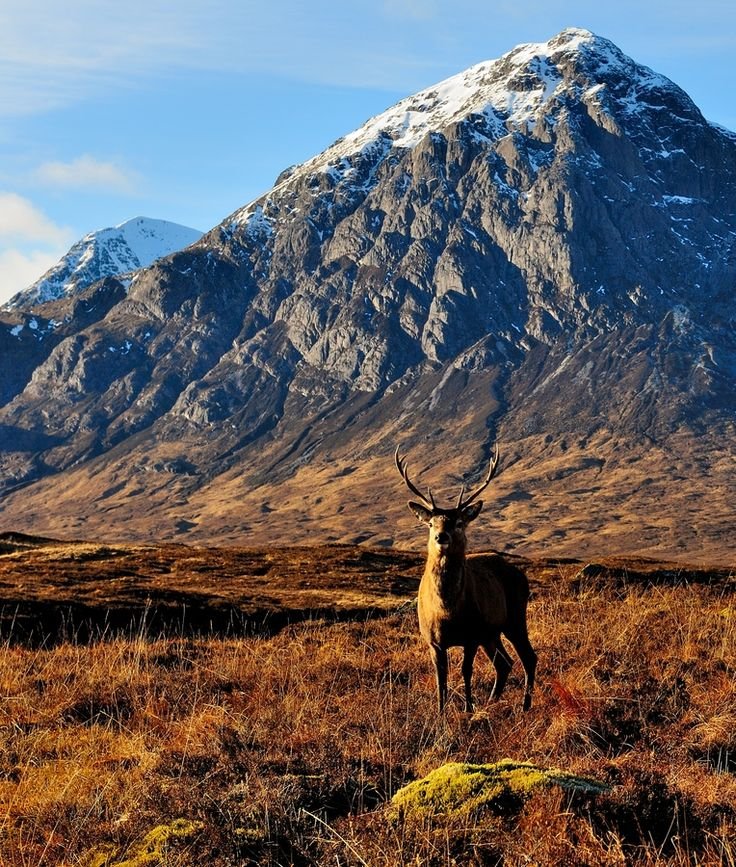 Beautiful Scottish Highlands, one of the last few wilderness' we have left in the UK