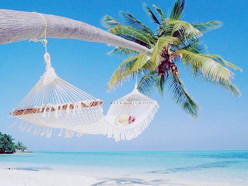 Beach Wallpaper, Dreams, Hammocks, Palm Trees, Best Quality, Travel, Places, Palms, Heavens
