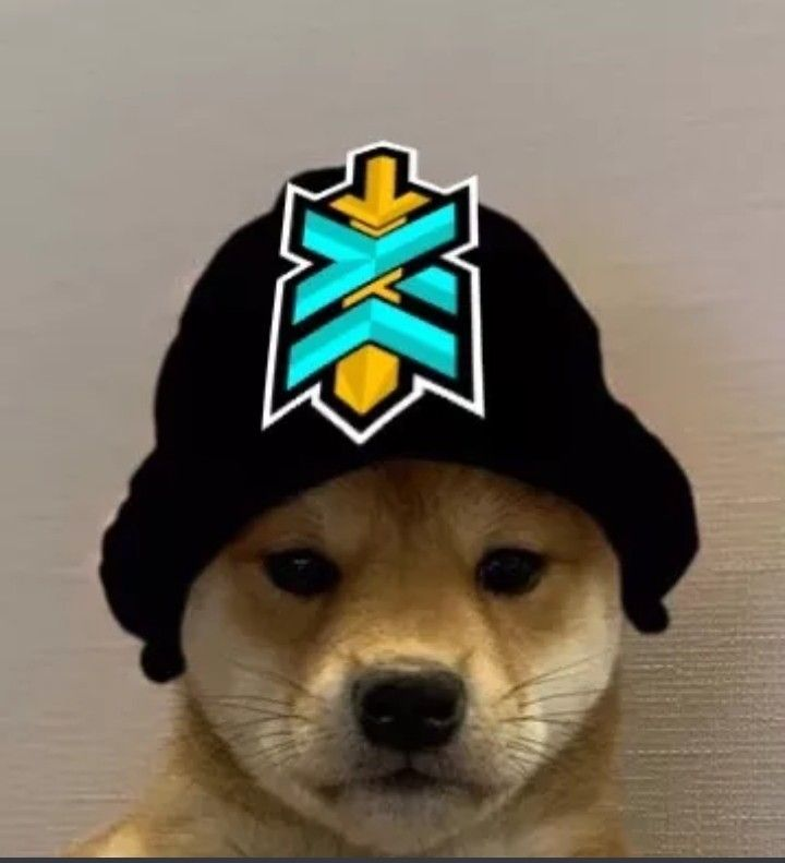 Exclusive Xyla Esports Dog Wif Hat