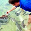 2014 holiday destination  Aquascene | Fish Feeding Sanctuary