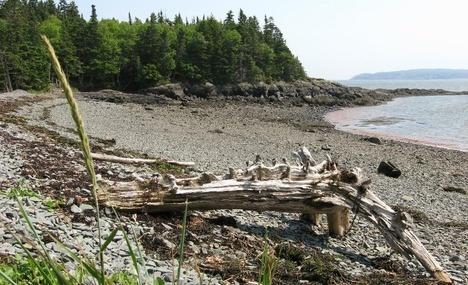 Irving Nature Park in Saint John, NB