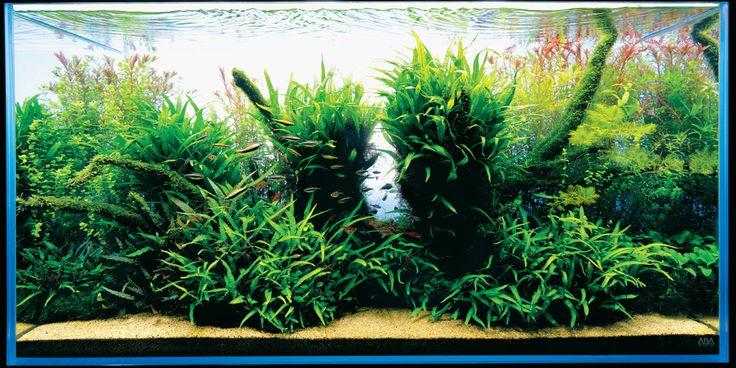 Aqua Forest Aquarium, ADA USA, Aqua Design Amano