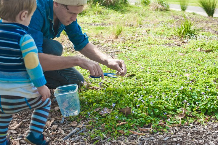 Urban Foraging Australian Native Violets — Mobile cocktail bar service, pop-up parties, functions and events in Sydney