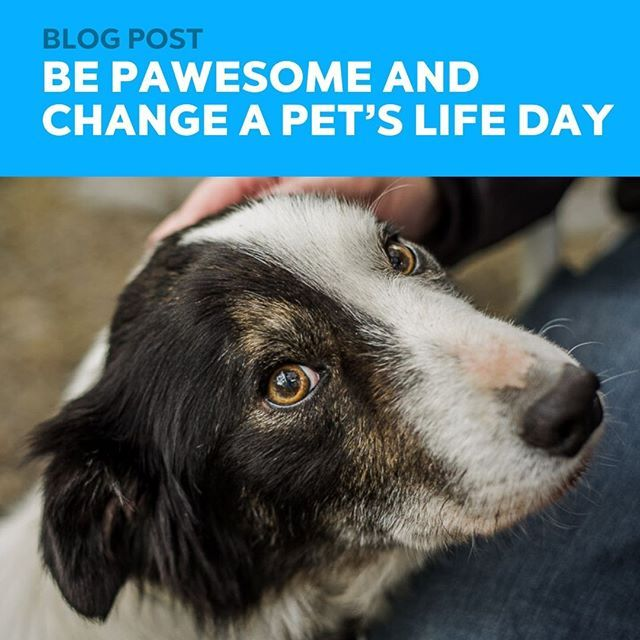 January 24 Is Change A Pet S Life Day And We Want To Encourage You To Change A Pet S Life Today If You Aren T Looking To Add A Fu In 2020 A