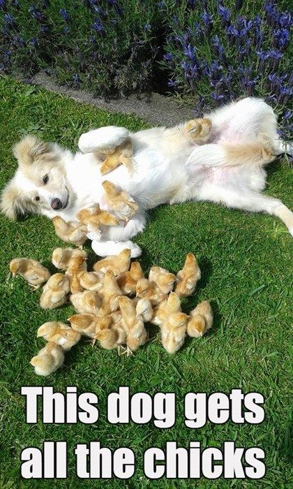 Dogs are such chick magnets!
