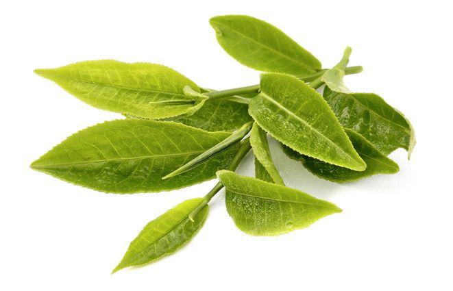 Yeşil Çay'ın faydaları