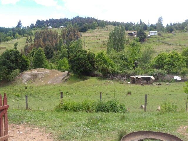 Mi campo bello sueño con volver algún día.