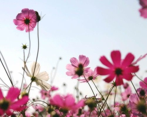 Wild flowers under a southern sky