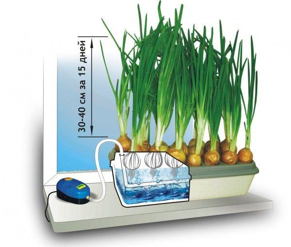 Гидропонное выращивание салата бизнес