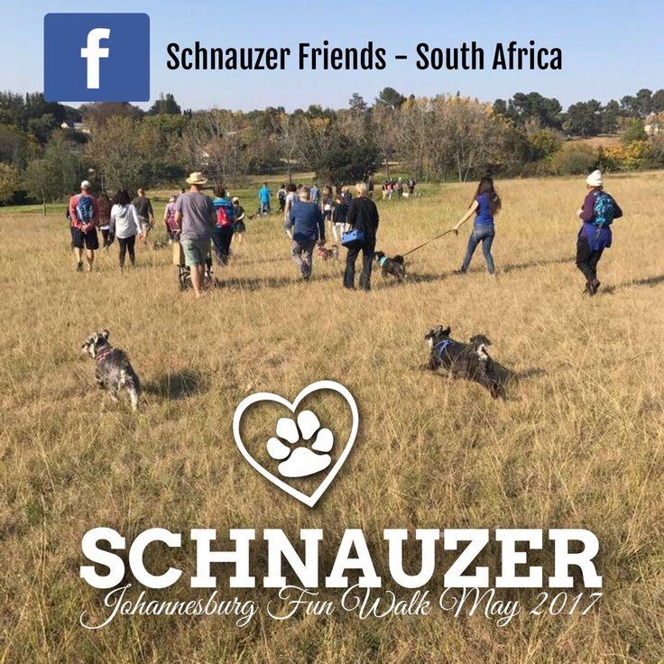 Jbg Schnauzer Walk May 2017