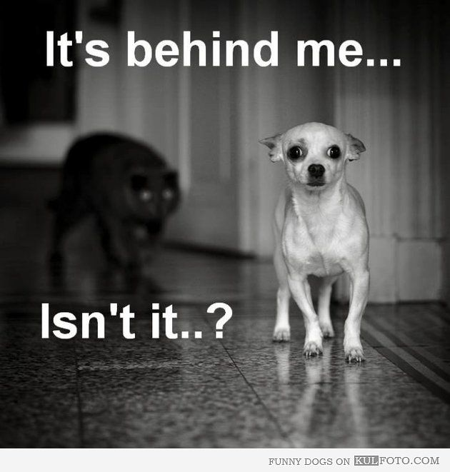 It's behind me... isn't it? - Funny dog looking scared because a black cat is following him.