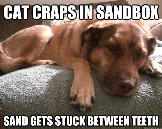 So true.  My dogs do this all the time.
