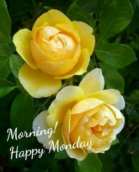 Good Morning Greetings Greetings Monday Morning Greetings Happy