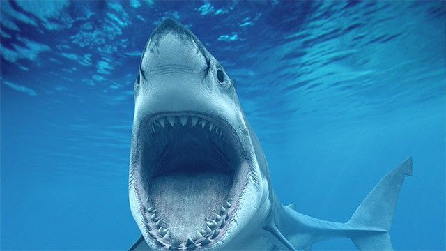 Austrália busca solução rápida para frear ataques de tubarões | Tecnologia | EL PAÍS Brasil