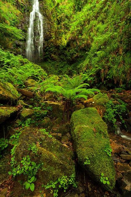Green world II by Antonio Carrillo (Ancalop), via Flickr