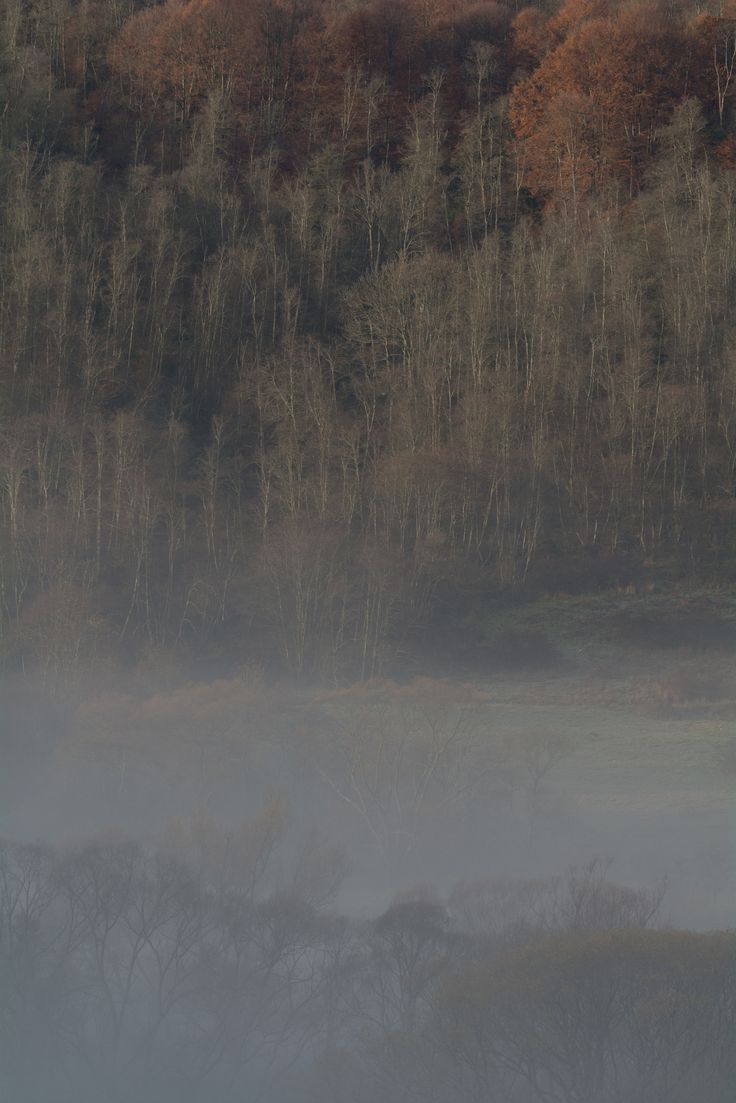 https://flic.kr/p/LaNneD | misty morning | beginning of November in Bieszczady…
