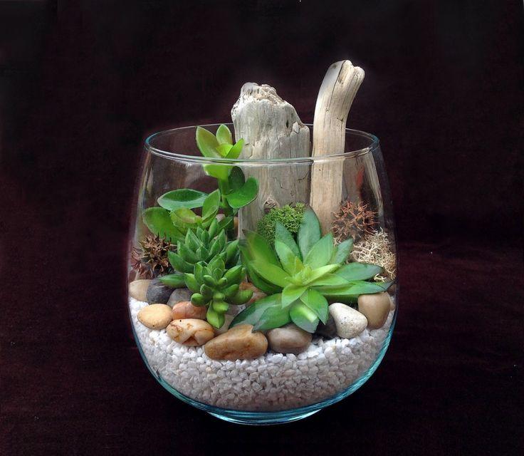 Plantes grasses                                                                                                                                                      Plus