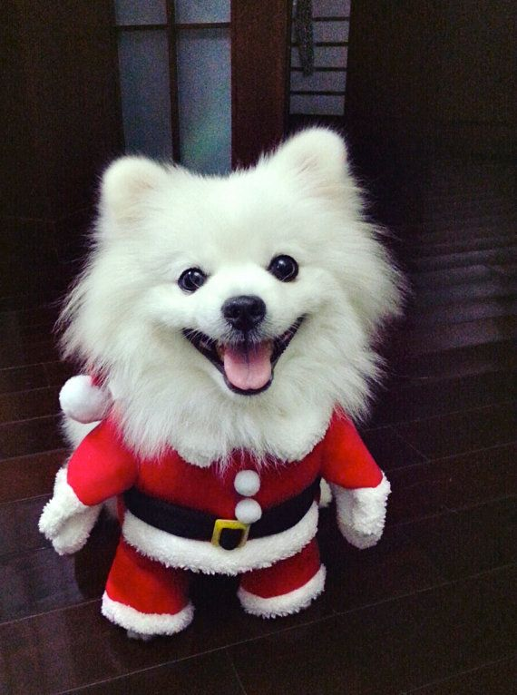 Best 25+ Dog christmas costumes ideas on Pinterest | Dog christmas ...