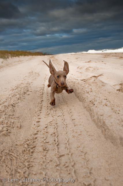 everybody love the beach!