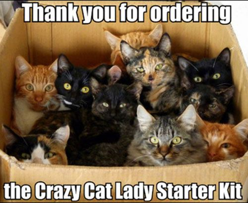 Do you need this starter kit? - 21 Funny cat captions