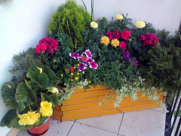 Kwiaty Na Sloneczny Balkon In 2021 Floral Plants Floral Wreath