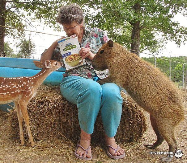 18_wm  Только здесь!  В Арканзасе открылся приют для животных, в котором всегда царит тёплая и дружеская атмосфера Вы всегда восхищались умением животных дружить и подавать друг другу лапу помощи?...