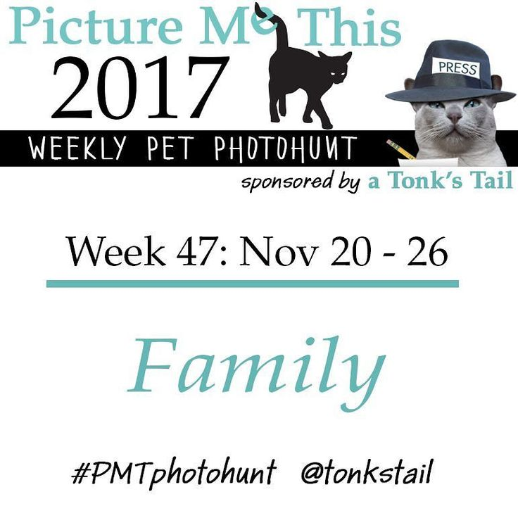 WEEK 47 #photohunt theme: FAMILY. Calling all #pet lovers! #cat #dog #rabbit #ferret all join in! Posted ea Sunday @ 10AM CST. Use #PMTphotohunt so fellow hunters can find you! Preview upcoming themes @ http://bit.ly/PicMeThis #fun #games #photography