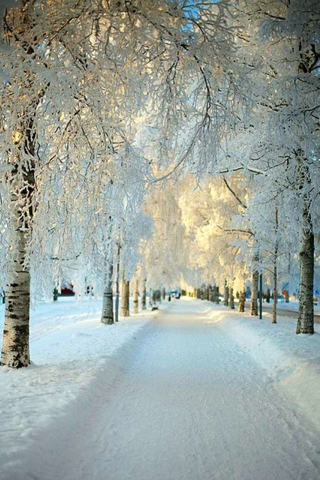 Winter iPhone Wallpaper tjn iPhone Walls 1 Pinterest