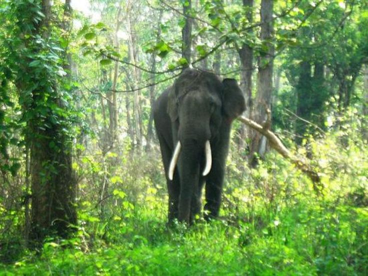 Vansda National Park - in Gujarat, India