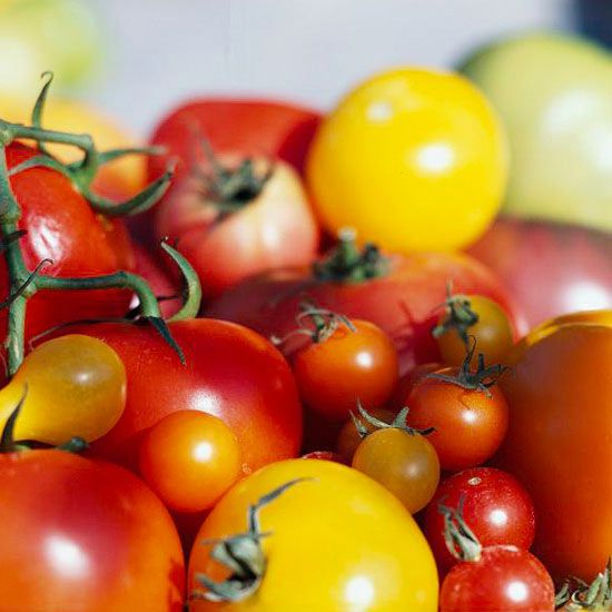 Enjoy your best crop of tomatoes yet with these 10 tips to get your tomato plants off to a strong start.