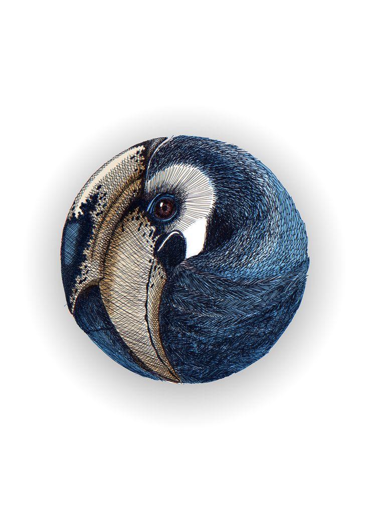 African Hornbill bird in a ball. Hand drawn illustration