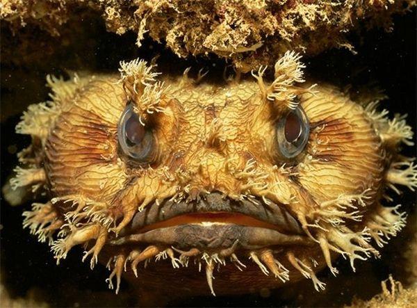 Cамые уродливые рыбы мирового океана